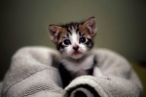 Kitten +