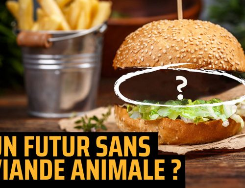Un futur sans exploitation animale est-il possible ?